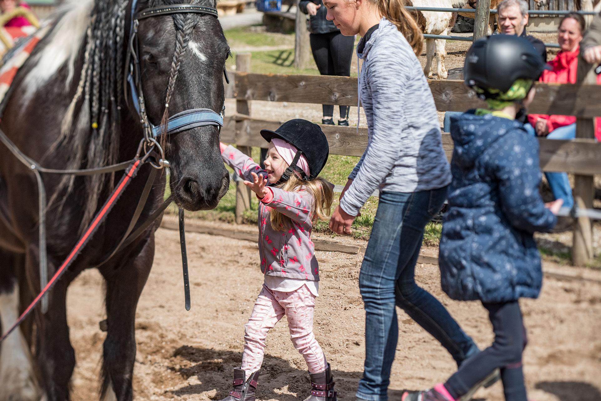 Pferderassen kennenlernen